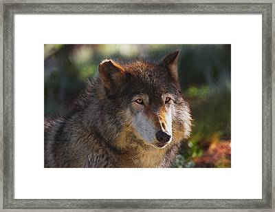 Framed Print featuring the photograph Keara  by Brian Cross