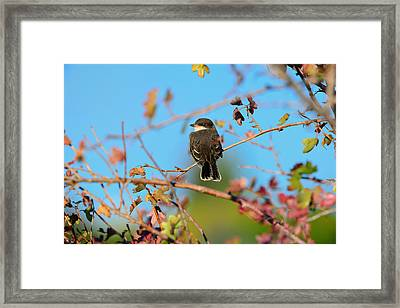 Keep An Eye Out Framed Print by Greg Norrell