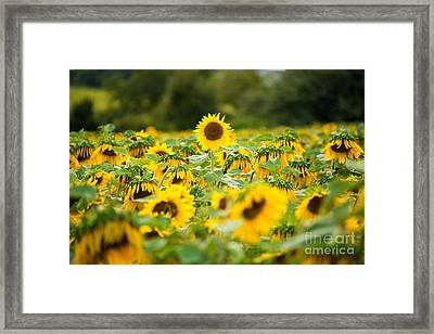Keep Your Head Up Framed Print