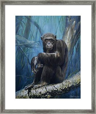 Keeper Of The Congo Framed Print by Dreyer Wildlife Print Collections