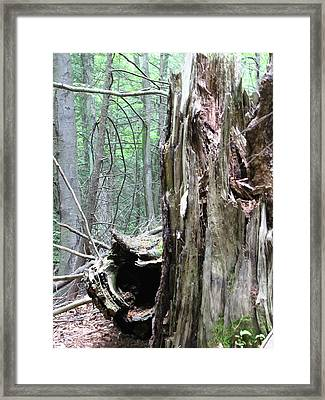 Framed Print featuring the photograph Keepers by Melissa Stoudt