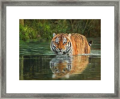 Keeping Cool Framed Print by David Stribbling