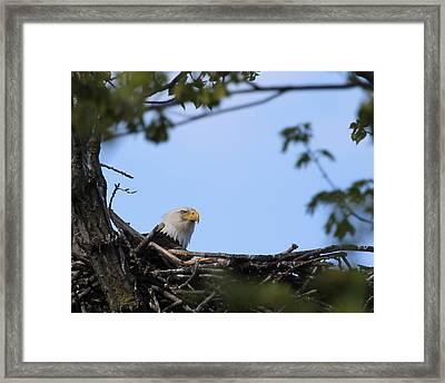 Keeping Guard Framed Print