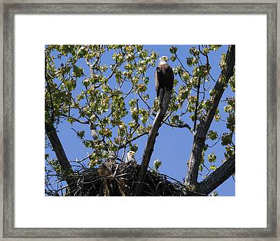 Keeping Lookout Framed Print