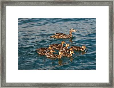 Keeping Them All Inline Framed Print