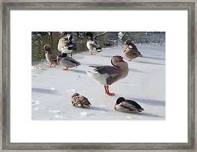 Keeping Warm Framed Print by David Birchall