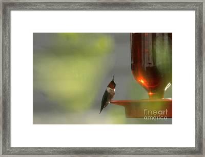 Keeping Watch Framed Print by Amanda Collins