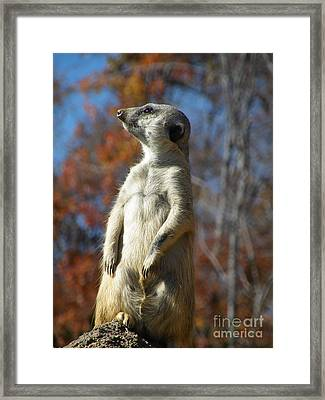 Keeping Watch Framed Print by Christy Ricafrente