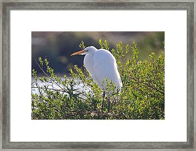 Framed Print featuring the photograph Keeping Watch by David Rizzo