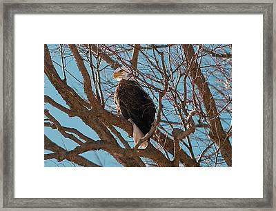 Keeping Watch Framed Print by Joe Scott