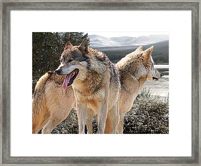 Keeping Watch - Pair Of Wolves Framed Print by Gill Billington