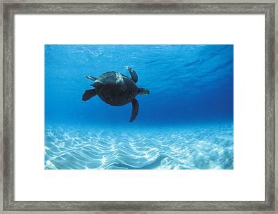 Keiki Turtle Framed Print