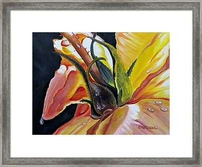 Kellys Rose Framed Print