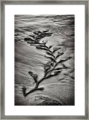 Kelp Snake Framed Print