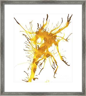 Kelpie 3 Framed Print by Lyndsey Warren