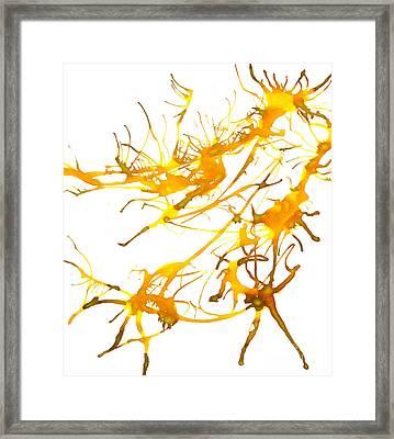 Kelpie2 Framed Print by Lyndsey Warren