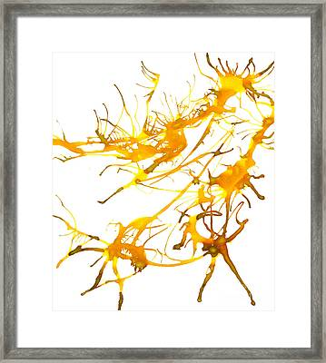 Kelpie2 Framed Print