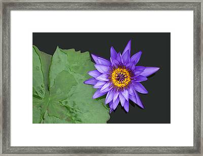 Kenilworth Aquatic Garden Framed Print