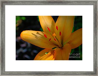 Framed Print featuring the photograph Kenilworth Garden One by John S