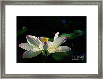 Framed Print featuring the photograph Kenilworth Garden Two by John S