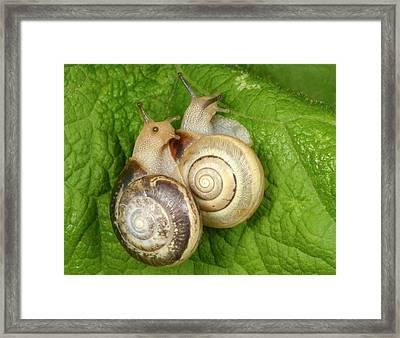 Kentish Snails Framed Print by Nigel Downer