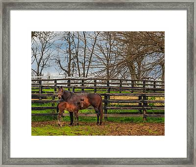 Kentucky Mare And Foal Framed Print