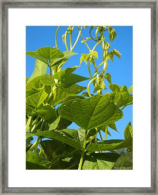 Framed Print featuring the photograph Kentucky Pole Beans by Deborah Fay