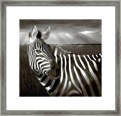 Kenya Black & White Of Zebra And Plain Framed Print