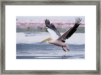 Kenya, Nakuru National Park Framed Print