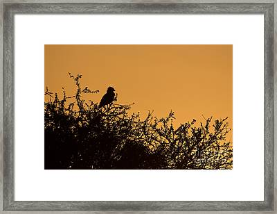 Kenyan Sunrise Framed Print