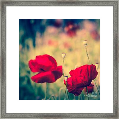 Keokea Poppy Dreams Framed Print