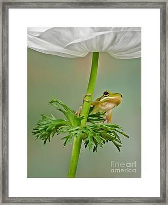 Kermits Canopy Framed Print by Susan Candelario