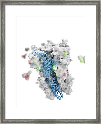 Ketamine Drug Binding To Ion Channel Framed Print by Science Photo Library
