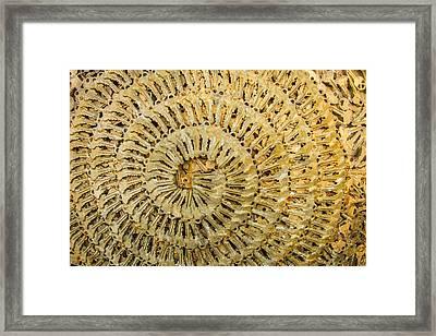 Key Ring Framed Print by Jean Noren