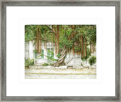 Key West Banyan Framed Print