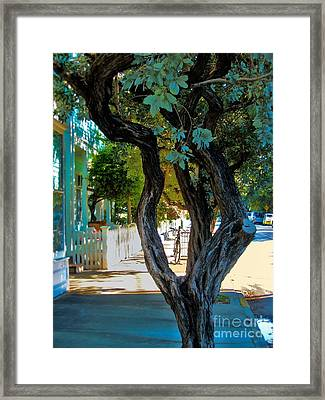 Key West Beauty Framed Print by Claudette Bujold-Poirier