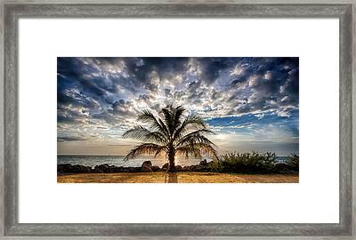 Key West Florida Lone Palm Tree  Framed Print