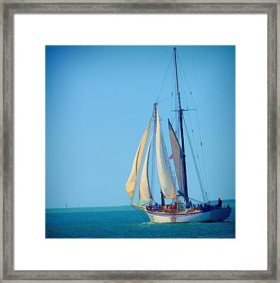 Key West Sailing Framed Print by Pamela Blizzard