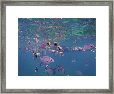 Keys Reef Framed Print by Carey Chen