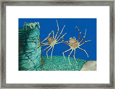 Kick Up Your Heels Framed Print by Ellen Henneke