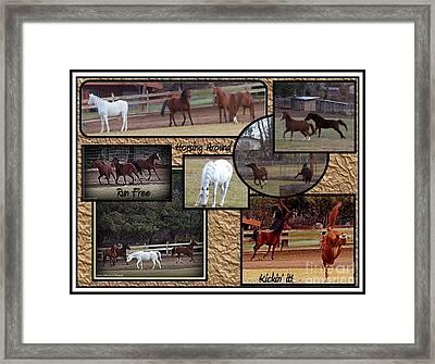 Horses Kickin It  Framed Print by Bobbee Rickard