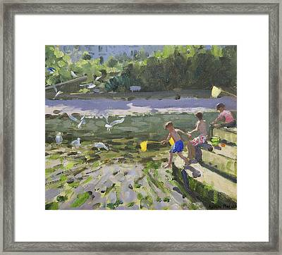 Kids And Seagulls Framed Print by Andrew Macara