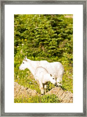 Kids In Glacier 4 Framed Print by Natural Focal Point Photography