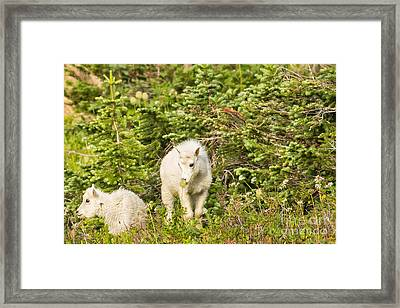 Kids In Glacier Np 3 Framed Print by Natural Focal Point Photography