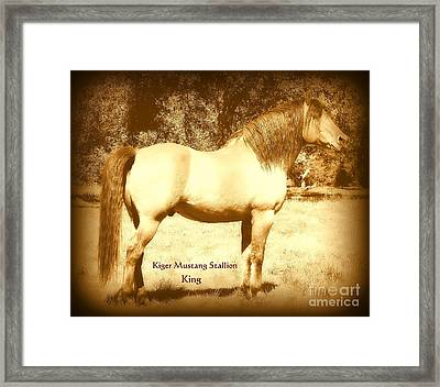 Kiger Mustang Stallion King Sepia Framed Print by Jodie  Scheller
