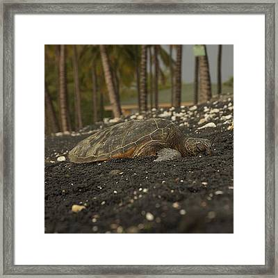 Kiholo Bay Turtle Rest Area #hawaii Framed Print