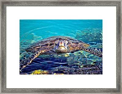 Kiholo Turtle Framed Print by Bob Kinnison