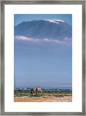 Kilimanjaro And The Quiet Sentinels Framed Print