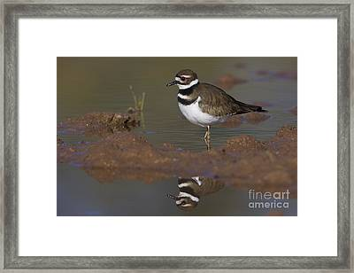 Framed Print featuring the photograph Killdeer Reflection by Bryan Keil