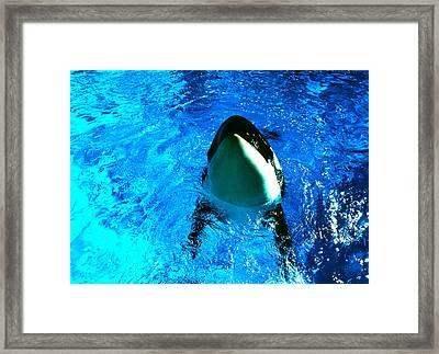Killer Whale Greeting Framed Print by Robert  Rodvik